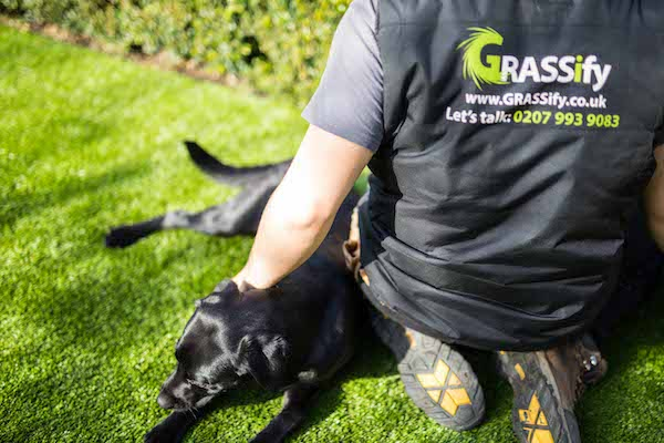 Artificial Grass and Dogs